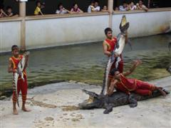 Bangkok crocodiles held up to the crowd