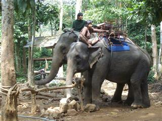 Take an elephant ride at the elephant camp Koh Chang