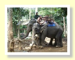 Koh Chang elephants at work