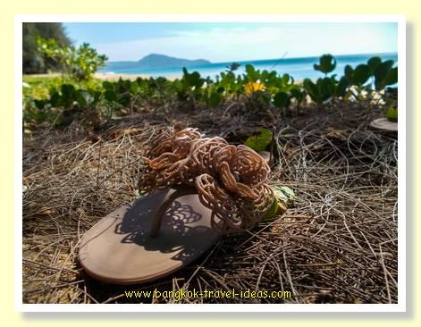 Dog eaten my shoe at Mai Khao beach Phuket