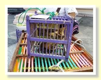 Small birds in a cage at Wat Hua Hin