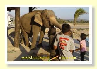 Mother elephant at Sam Phan Nam floating market