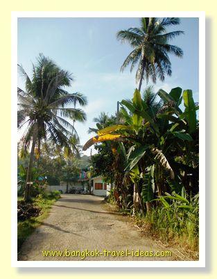 Soi leading down to Gu Bay bungalows