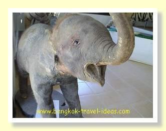 Stuffed Asian elephant