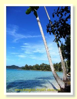 Palm trees overhanging the watersedge