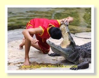 Crocodile farm in Bangkok's Samut Prakarn province