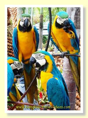 Nong Nooch parrot display