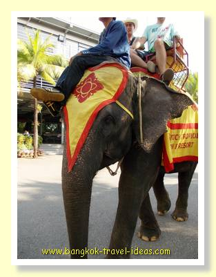 Nong Nooch elephant rides around the car park