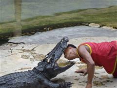 Bangkok crocodile bites man