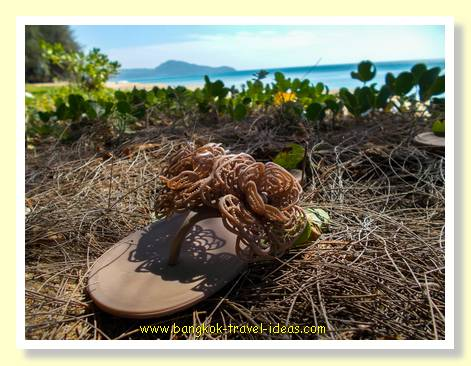 Dog eaten my shoe at Mai Khao beach Phuket