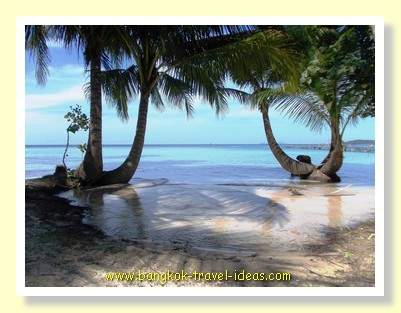 Interesting palm trees on Koh Kood